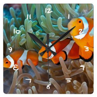 Clownfish Vierkante Klok