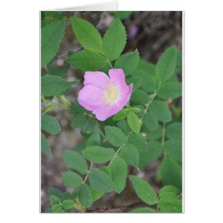 Colorado wildflower briefkaarten 0