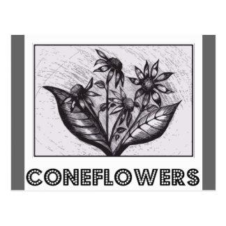 Coneflowers Wens Kaarten