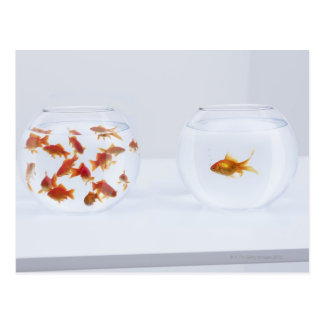 Contrast van vele goudvis in fishbowl en briefkaart