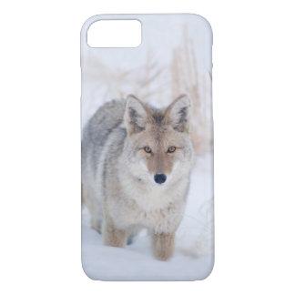 Coyote in iphone van het Wild van de Winter 8/7 iPhone 8/7 Hoesje