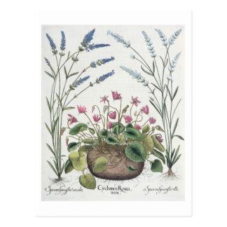Cyclaam en Lavendel: 1.Cyclamen Romanum; 2.Spica Briefkaart