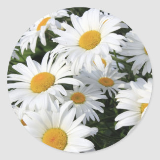 Daisy Flowers Growing White Ronde Sticker