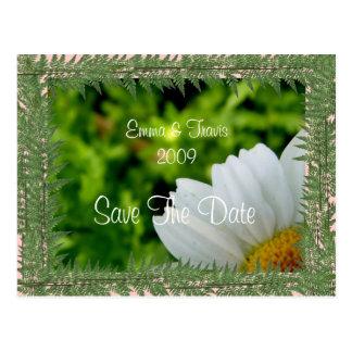 Daisy See Briefkaart