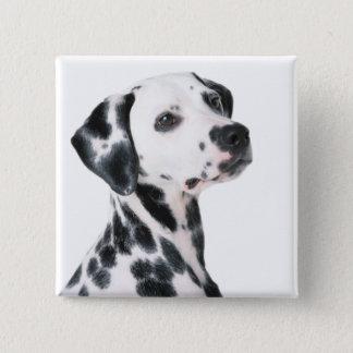 Dalmatische hond mooie foto, gift vierkante button 5,1 cm