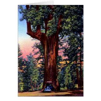 De Aandrijving Thr van de Californische sequoia Wenskaart