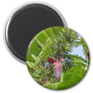De aanplanting van de banaan in het Bleke Eiland Magneet
