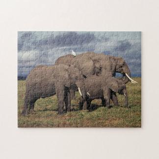 De Afrikaanse Olifant van het baby met familie Puzzel