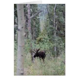 De Amerikaanse elanden van de stier in het bos Wenskaart