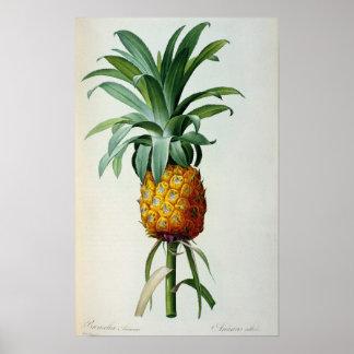 De Ananas van de bromelia, van 'Les Bromeliacees Poster