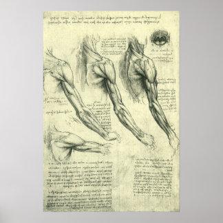 De Anatomie van het wapen en van de Schouder door Poster