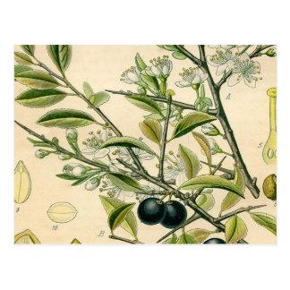 De antiek Botanische BloemenTekening van de Briefkaart