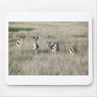 De antilope van de springbok muismat