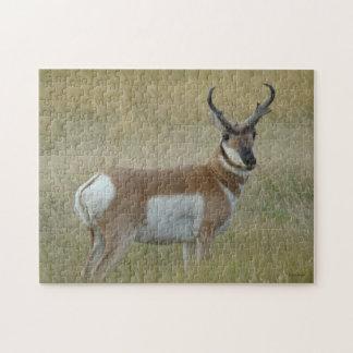 De Antilope van Pronghorn van A0001 Legpuzzel