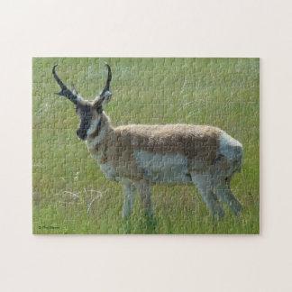 De Antilope van Pronghorn van A0036 Puzzel