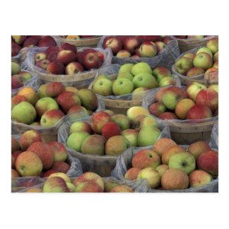 De appelen van Macintosh van de Staat van New York Briefkaart