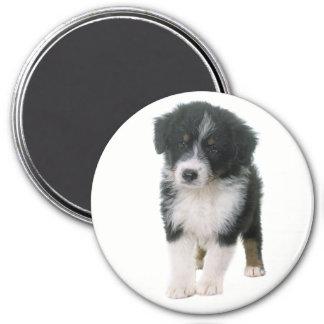 De Australische Hond van het Puppy van Aussie van Magneet