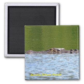 De Australische Krokodil van het Zoutwater Magneet