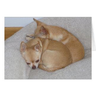 De BC Leuke Wenskaarten van het Puppy Chihuahua