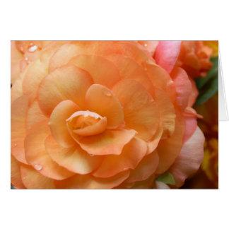 De Begonia van de perzik Briefkaarten 0