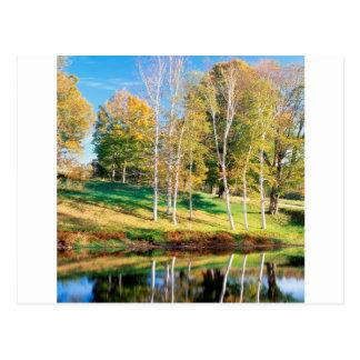 De Berk Vermont van bomen Briefkaart