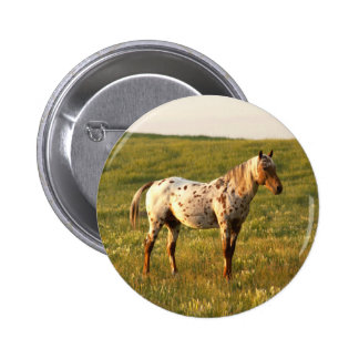 De bevlekte Hengst van het Paard Ronde Button 5,7 Cm