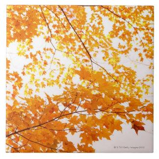 De Bezinning van de Bladeren van de herfst Tegeltje