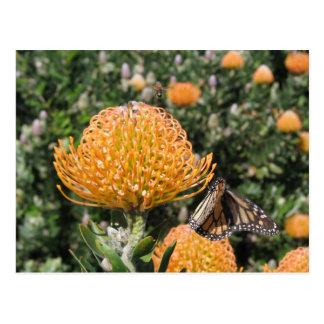 De Bij & de Vlinder van Protea Briefkaart