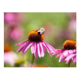 De Bij van Coneflower en van de Honing Briefkaart