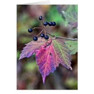 De Bladeren en de Bessen van de Herfst van Briefkaarten 0