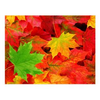 De Bladeren van de herfst Briefkaart