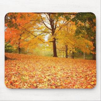 De Bladeren van de herfst, Central Park, de Stad Muismat