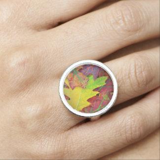 De Bladeren van de herfst in geel, rood, oranje en Foto Ringen