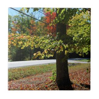 De Bladeren van de herfst in Maine Tegeltje