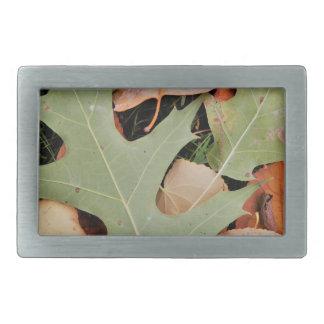 De bladeren van de herfst met geel en groen gespen