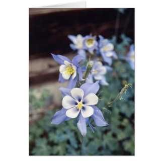 De Blauwe Akelei van Colorado Wenskaart