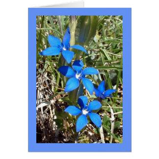 De blauwe Alpiene Bloem van de Gentiaan -- De Briefkaarten 0