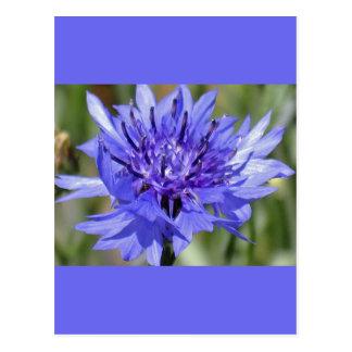 De blauwe Bloem van de Knoop van de Vrijgezel Briefkaart