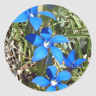 De blauwe gentiaan bloeit sticker