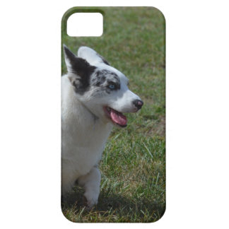 De blauwe Hond van Merle Corgi Barely There iPhone 5 Hoesje