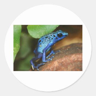 de blauwe kikker van de vergiftpijl ronde stickers