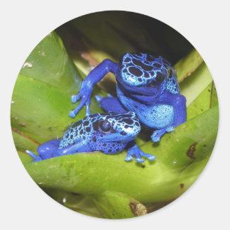 De blauwe Kikkers van het Pijltje van het Vergift Ronde Stickers