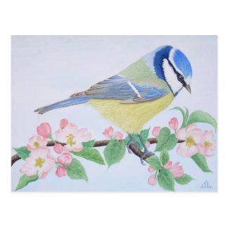 De blauwe Mees in de lente Briefkaart