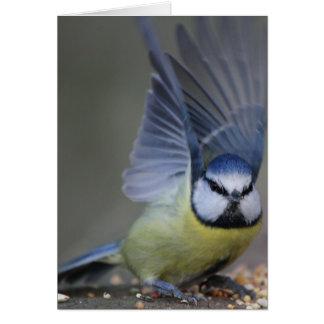 De blauwe mooie vleugels van de meesvogel kaart