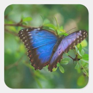 De blauwe Stickers van de Vlinder