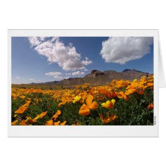 De Bloei van de papaver - El Paso, Texas Briefkaarten 0