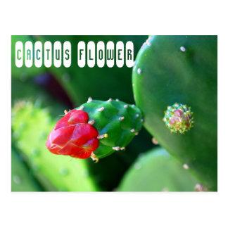 De Bloem van de cactus Briefkaart