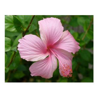 De bloem van de Dominicaanse Republiek Briefkaart