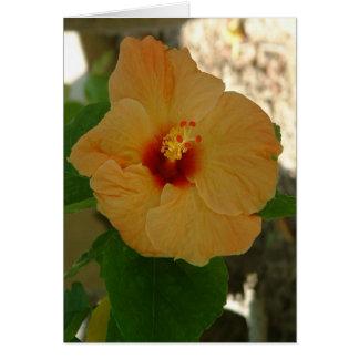 De Bloem van de Hibiscus van de abrikoos Kaart