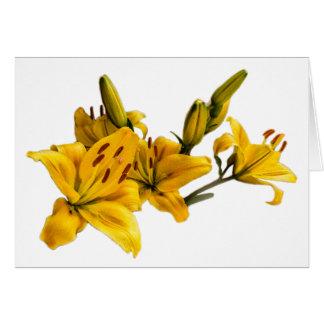 De bloem van de lelie kaart